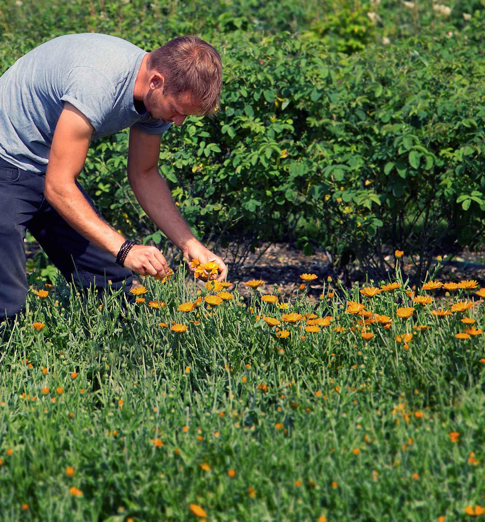 Peacemarsh Head Gardener - Fraser Thompson